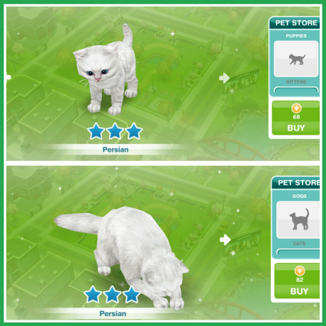 How Can I Get A Dog In Sims Freeplay